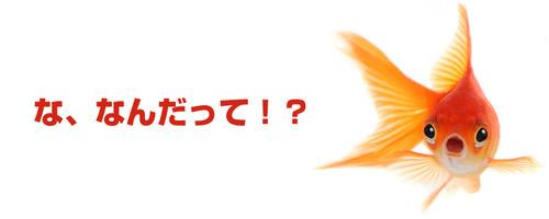 【新スライドバナー、4/23リリース予告!】「本日のポイント最大○倍」表示が追加!